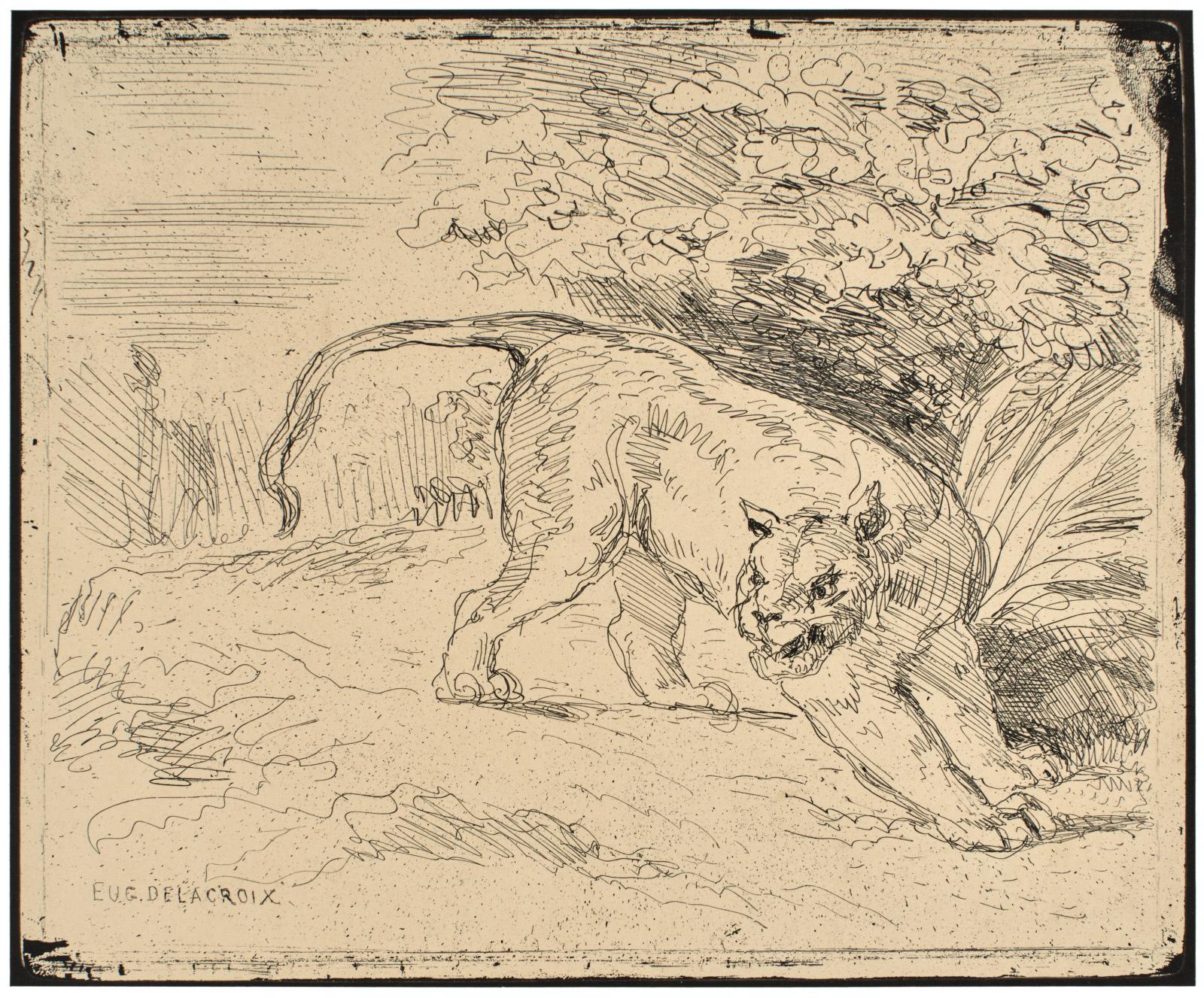 TIGER AT BAY (TIGRE EN ARRÊT)